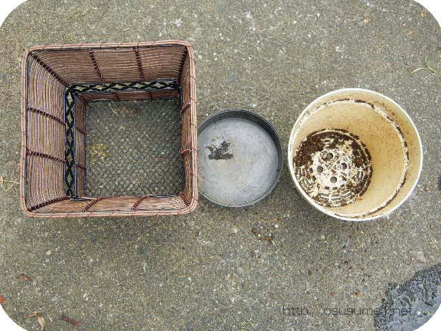 アジサイの元の鉢