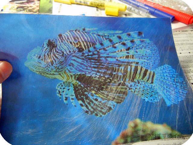 お手本熱帯魚